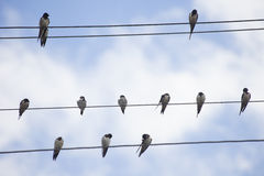 Birds on Wire Royalty Free Stock Photo