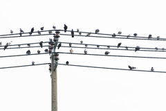 Birds on a wire. stock photography