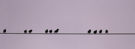 Birds on a wire, numerical sequence Stock Photography