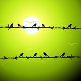 Birds on wire silhouette Stock Photo