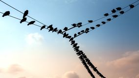 Birds on wire. Silhouette of birds stays on the wire Stock Photography