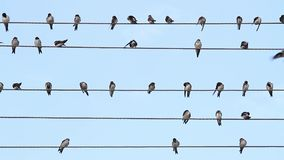Birds on the wire sit like music notes