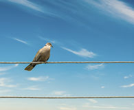 Birds on a wire  sky background. Stock Images