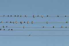 Birds on a wire. Royalty Free Stock Images