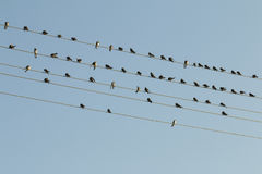 Birds on a wire. Royalty Free Stock Photo