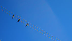 Birds on wire Royalty Free Stock Photography