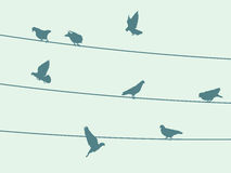 Birds on wire. Vector background illustration with birds on wire Stock Photography