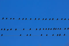 Birds on wires Stock Photography