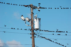 Birds on Wires. A flock of starlings resting on electrical wires Stock Photo