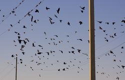 Birds on wires. Flock of birds sitting on wires and flying against the background of blue sky Stock Photography