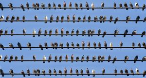 Birds on Wires Royalty Free Stock Photography