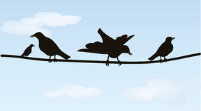 Birds on wires Royalty Free Stock Image