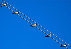 Birds on wires. Against the blue sky Stock Photos