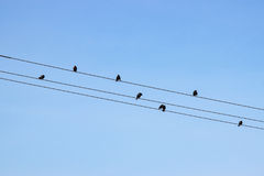 Birds on Wires Against Blue Sky. Numerous small birds on telephone wires silhouetted against a blue sky Stock Image