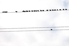 Birds on wires. Birds on wires in autumn Stock Photography