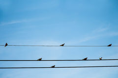 Birds on wires. With blue sky background Stock Images