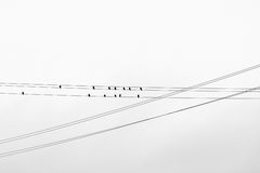 Birds on wires. Royalty Free Stock Images