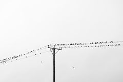 Birds on wires. Stock Images