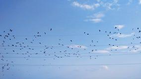 Birds on wires, flying birds, birds in sky Stock Photo