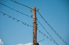 Birds on wires. Group of birds on wires Royalty Free Stock Image