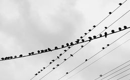 Birds on wires having a chat Royalty Free Stock Photography