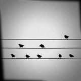 Birds on wires. Image of various birds on power lines Royalty Free Stock Photo