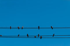 Birds on wires isolated against clear blue sky. Several birds on wires. Isolated against clear blue sky. Grey doves Stock Photo