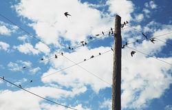 Birds on wires. Landscape with blue sky and clouds and birds Royalty Free Stock Photo