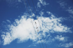 Birds on wires. Landscape with blue sky and clouds and birds Stock Image
