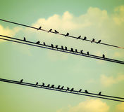 Birds on wires over a blue sky with clouds background toned with Stock Photography