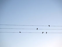 Birds on wires Stock Image