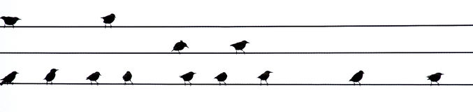 Birds on wires. Birds on power lines, black on white Royalty Free Stock Images