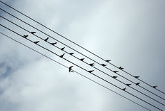Birds On Wires Royalty Free Stock Photos