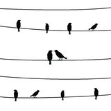 Birds on wires4 Royalty Free Stock Image