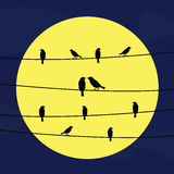 Birds on wires5 Stock Photography
