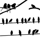 Birds on Wires, silhouette set Royalty Free Stock Images