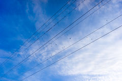 Birds on wires Royalty Free Stock Images