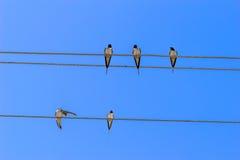 Birds on wires. Stock Photos