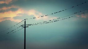 Birds on the Wires stock footage