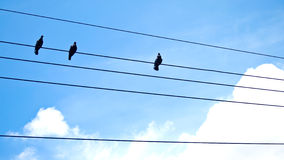 Birds on wires. Three birds on wire with blue sky backgrond Stock Photography