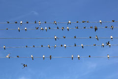 Birds on wires. Birds on a wire against the sky like notes Royalty Free Stock Image