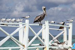 Birds on a wooden pier Stock Photo
