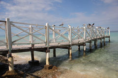 Birds on a wooden pier Stock Image