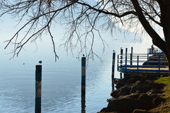 Birds on woods, Lovere town, Lake Iseo, Italy stock image