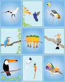 Birds of the world Royalty Free Stock Photography