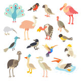 Birds of the world, a big set vector illustration. Royalty Free Stock Photo