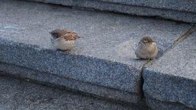 Birds. When you hurt your friend Stock Photos