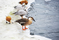 Birds in the zoo in winter. Stock Images