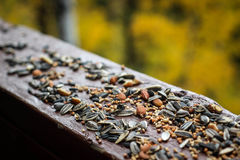 Birdseed στο ξύλο στοκ φωτογραφία με δικαίωμα ελεύθερης χρήσης
