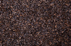 Birdseed Royalty Free Stock Photography